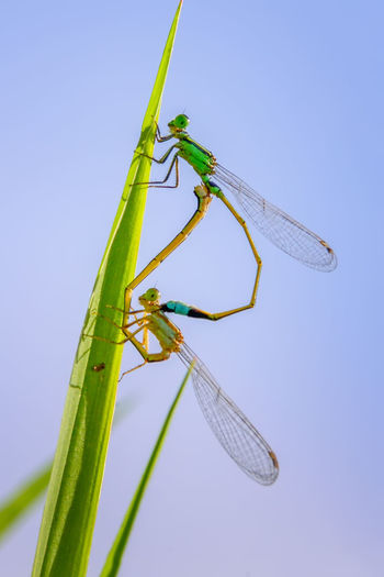 Dragonfly /