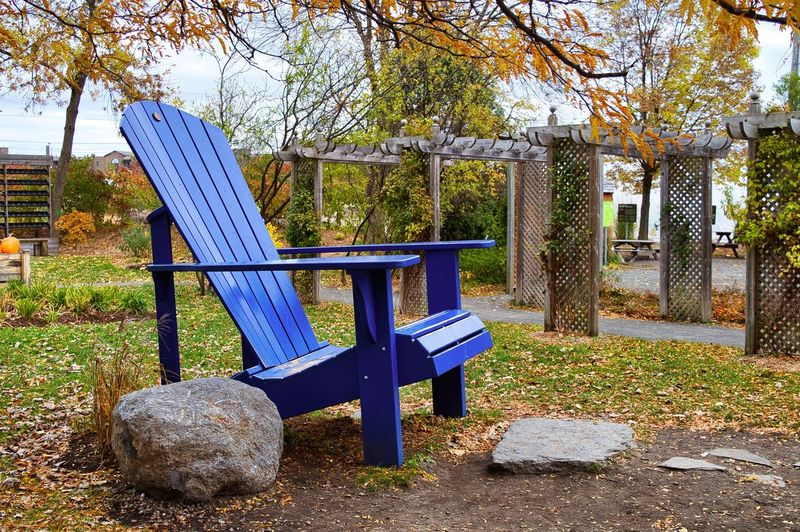 Tree Plant Seat Nature Day Solid Empty No People Absence Bench Rock Rock - Object Architecture Chair Built Structure Park Table Outdoors Land Blue Park Bench Autumn
