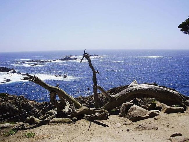 Hiking by the ocean back in 2010. So beautiful... Pointlobos Pointlobosstatereserve California Carmelbythesea Hikingbythesea Lovingtheview Pacific Pacificocean Sea Pacificcoast