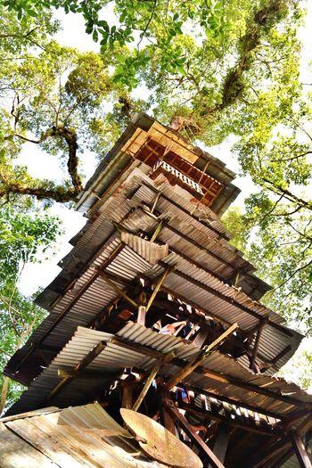 AllYouNeedIsEcuador Nature Ecuador Traveling Amazonia Casa del árbol Mirador