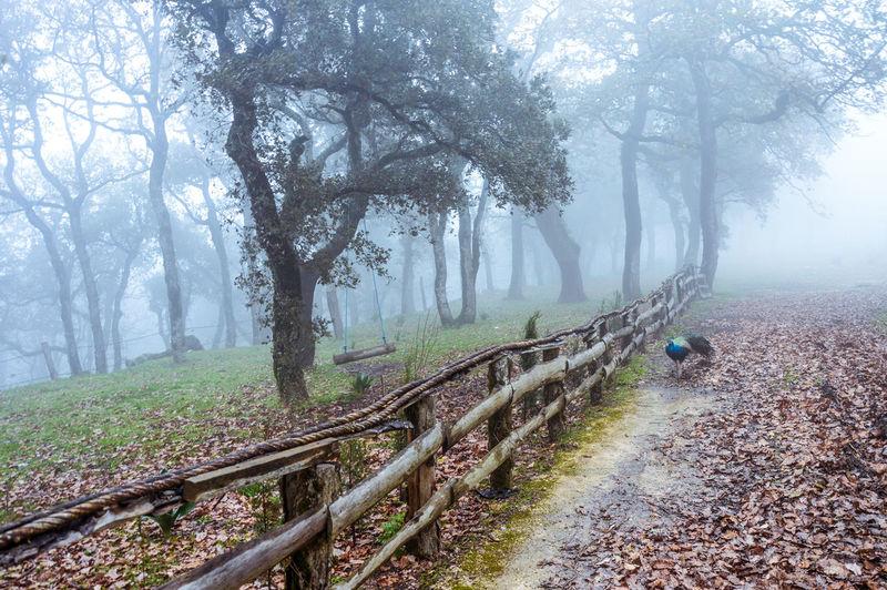 Fog Food Photography Green Leaves🌿 Mashrooms Nature Photography Sand Tunisia Yellow