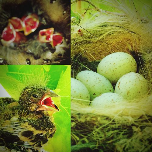 Bird Egg Nature Fragility Young Bird Beauty In Nature