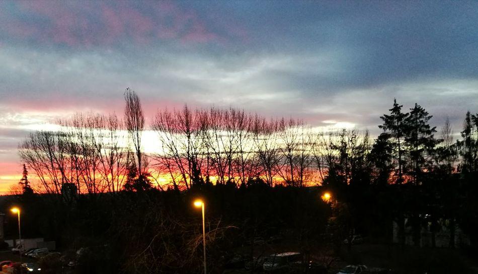 Sunset Sky Tree Dramatic Sky No People Multi Colored Cloud - Sky