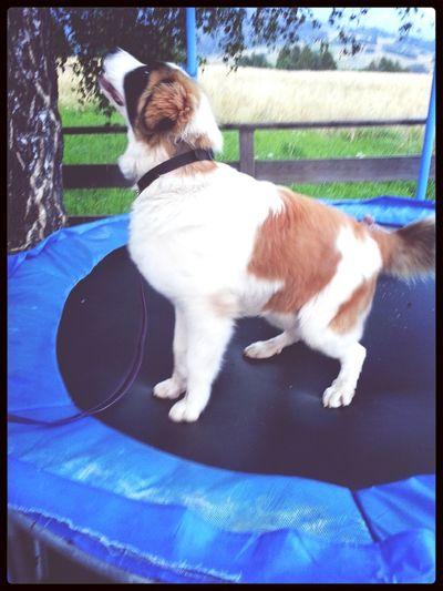 Jumping dog ♥ Dog Chewbe Jump Lovely
