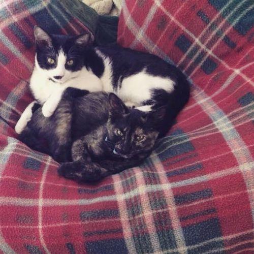 Kittens Mybabes  Socut