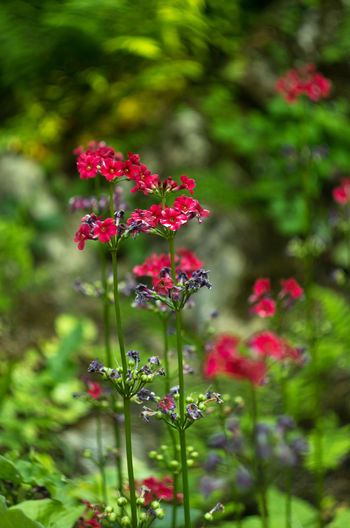 Beauty In Nature Blooming Day Flower Flower Collection Flowers Fragility Freshness Growth Nature No People Outdoors Pink Color Plant Red