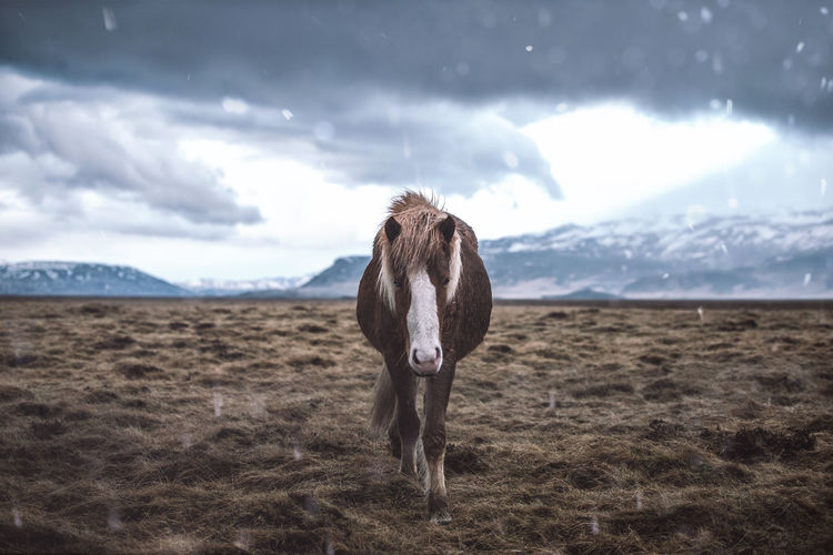 Horse standing on grass against sky
