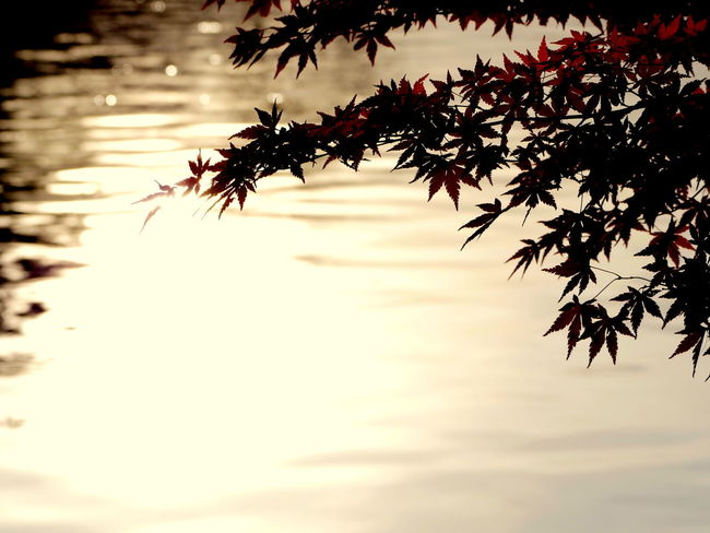 Autumn Autumn Colors Beauty In Nature Maple Leaf Nature No People Outdoors Water