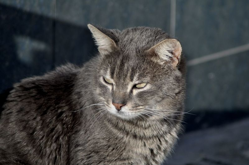 Animal Themes Animal Mammal One Animal Feline Cat Focus On Foreground Pets Day Domestic Cat