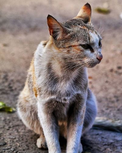 Want to make it pet 😍 and she was too roaming around me😄 . Captured_By_Me Cat Wildlifephotography Animals Wildlife Mountains Dalhousie Himachal DSLR Sony Sonyimages SonyAlpha58 Sonya58 Alpha58 Amazing Beautiful Pet Lover Photography Photographyislifee