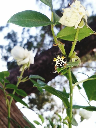 Pretty spider. Spider