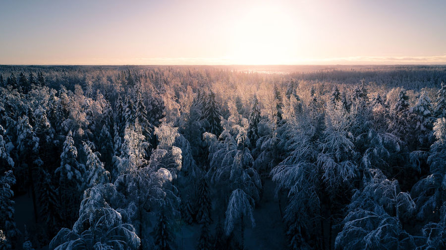 Snow covered trees against sky during sunset