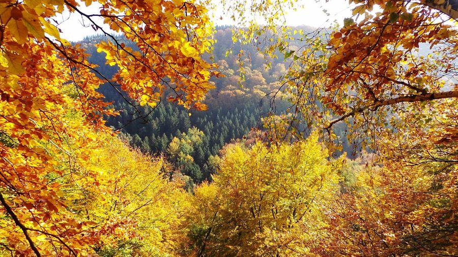 Autumn🍁🍁🍁 EyeEm Nature Lover Naturelovers Nature