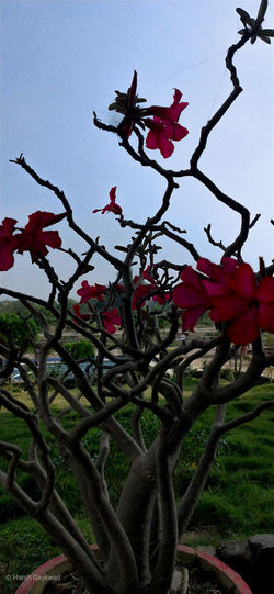 Close-up of red flowering plant against sky