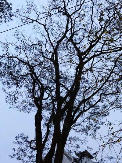Trees And Nature Tree And Sky Tree Picoftheday Bangladesh 🇧🇩 Dhaka, Bangladesh Dhakagraam Dhakagram Dhaka Sky Dhaka On Eyeem Bangladesh EyeEm EyeEm Selects Tree Plant Low Angle View Branch Sky Beauty In Nature No People Nature Growth Day Outdoors Tree Trunk Scenics - Nature Tree Canopy