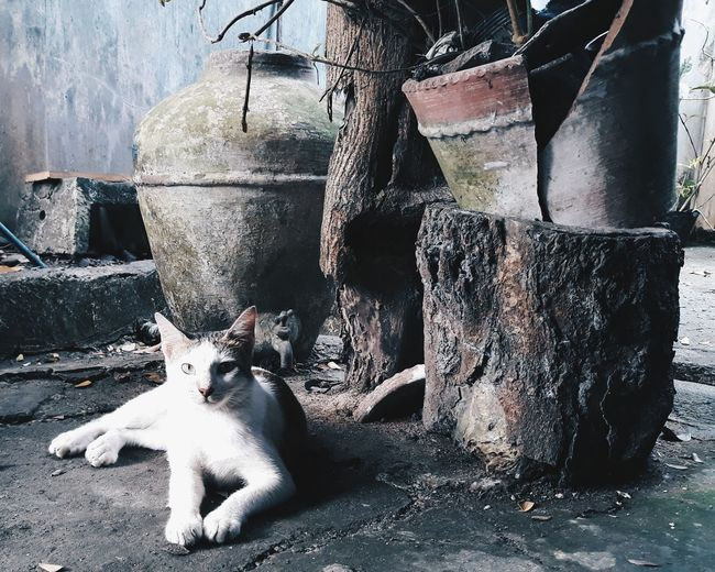 cat is a symbol of grace and poise Cats Of EyeEm Catslife Egyptianpets Catsoftheworld Cats 🐱 Outdoor Photography No People Details Of The Day Rustic Living 9lives