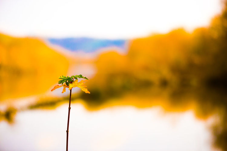 Fine Art Photography Beauty In Nature Blurry Background Close-up Day Flower Flower Head Fragility Freshness Growth Landscape Nature No People Outdoors Plant River Rural Scene Scenics Sky Stem Tranquil Scene Tranquility Yellow