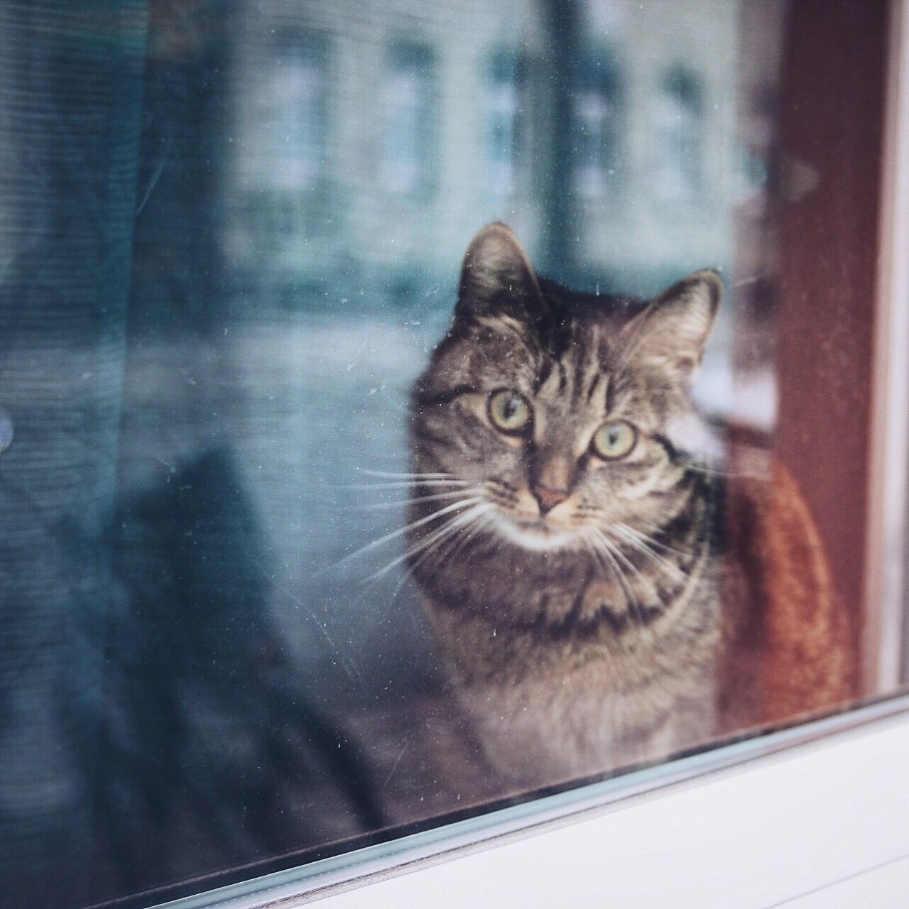 Portrait Of Domestic Cat Through Window