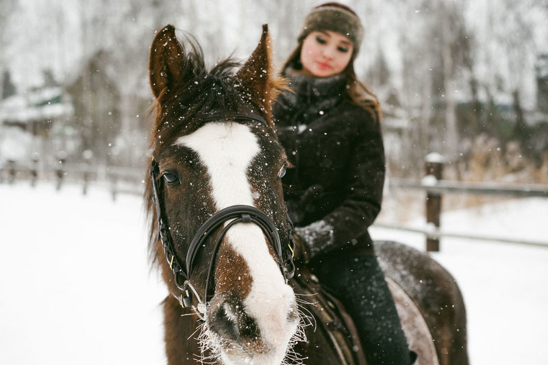 Animal Themes Cold Temperature Day Domestic Animals Field Focus On Foreground Frozen Horse Horse Cart Horsedrawn Mammal Nature No People One Animal Outdoors Portrait Snow Snowing Weather White Color Winter Working Animal