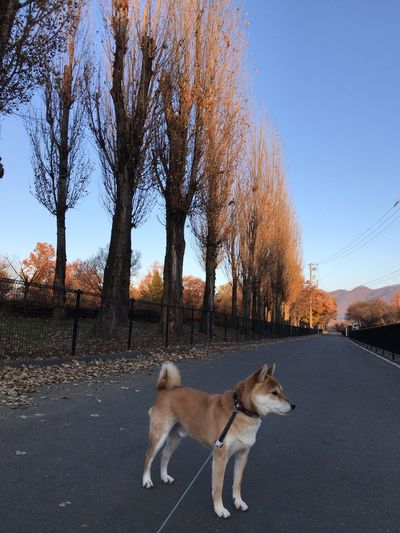 Dog on road against clear sky