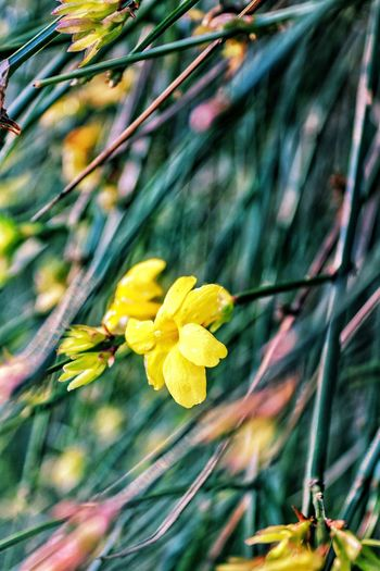 Flower Fragility Growth Petal Nature Beauty In Nature Yellow Plant Day Freshness Outdoors Flower Head Blooming No People Close-up