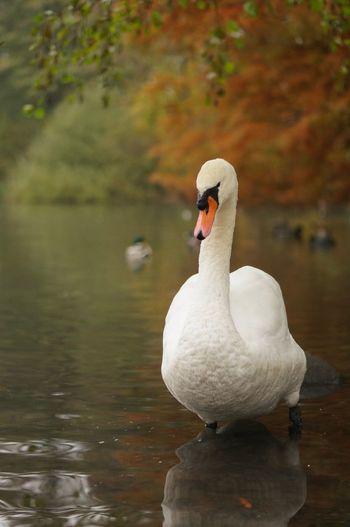 swan ll EyeEm