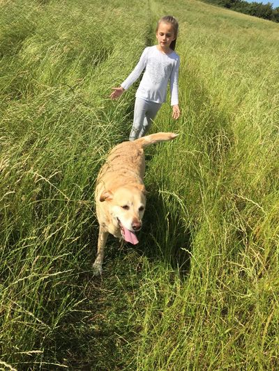 High angle view of girl with dog walking on grassy field