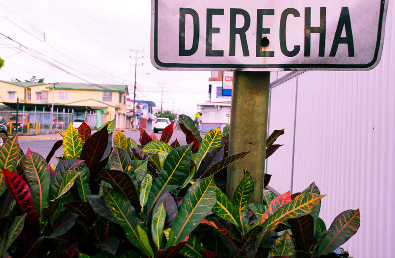 Central America Communication Costa Rica Derecha Direction Focus On Foreground Guidance Information Sign Purple Road Sign San Jose Text Tinted Urban Jungle Urban Spring Fever Adapted To The City