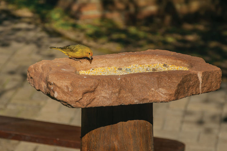 Close-up of bird perching on wood