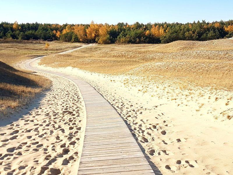 Dead Dunes Nida Lithuania Sand Dunes Outumn Outumn Colors Sunny Sunnyday☀️
