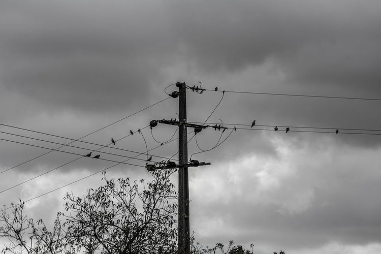 The Week On EyeEm Bird Cable Cloud - Sky Connection Day Electricity  Electricity Pylon Fuel And Power Generation Low Angle View Nature No People Outdoors Power Line  Power Supply Sky Technology Telephone Line Be. Ready.