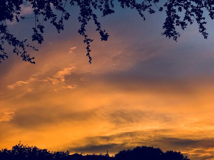 Peaceful Tree Evening Sunset Beauty In Nature Nature Silhouette Tree Sky Scenics Tranquility Tranquil Scene No People Cloud - Sky Outdoors