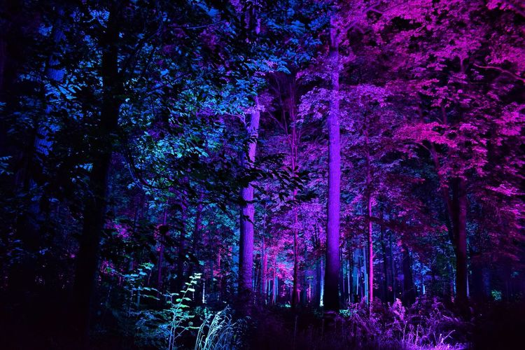 ✨ Inspiration Art Festival ✨ Tree Night Beauty In Nature Nature Growth Forest Tree Trunk Illuminated No People Scenics Outdoors Tranquility Low Angle View Branch Light Effect Neon Life Bright Art Event Arts Culture And Entertainment Art Festival Night Photography Enchanted Forest Trees Night Lights Nightphotography