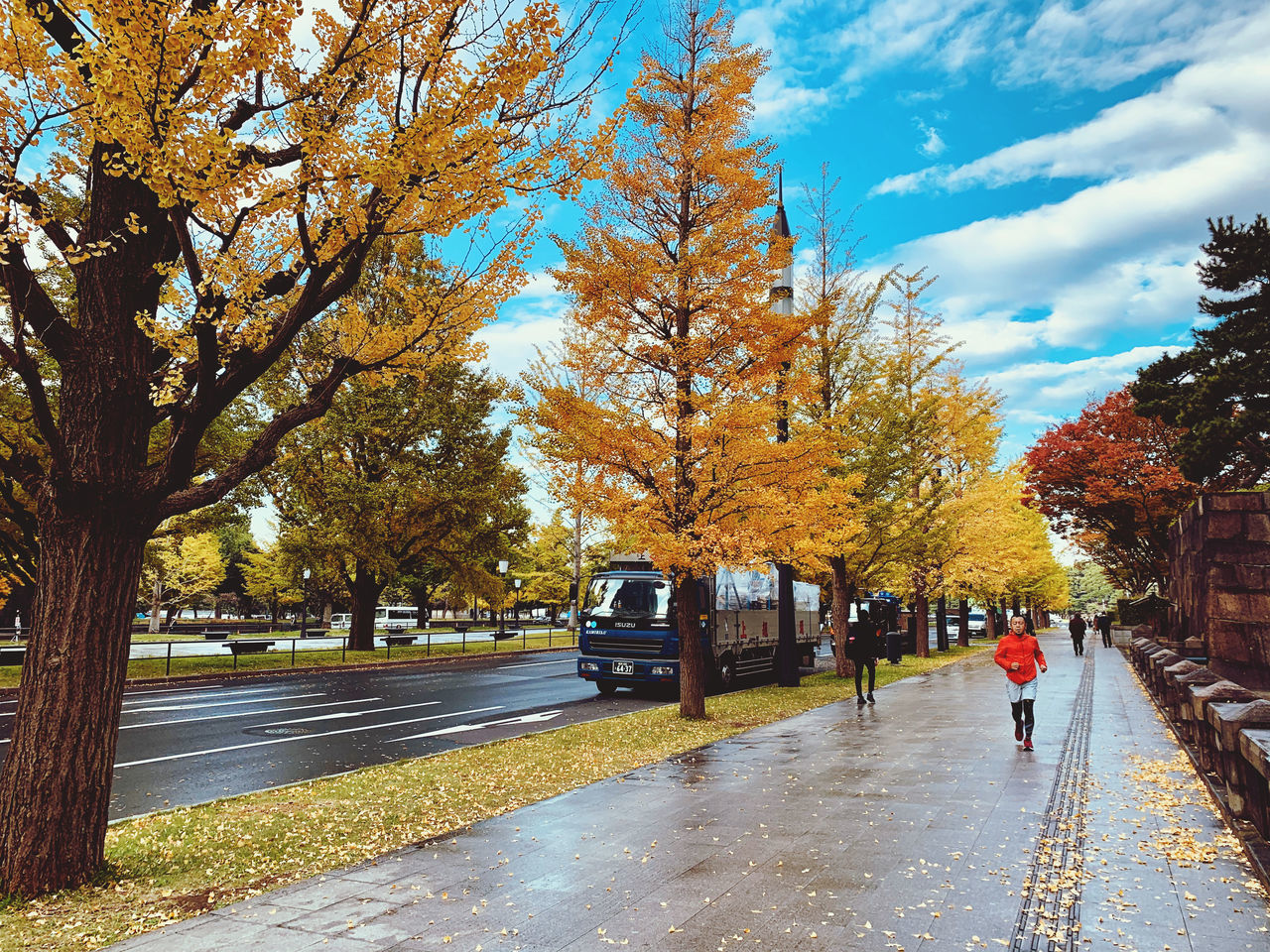 TREES BY WET STREET IN CITY DURING AUTUMN