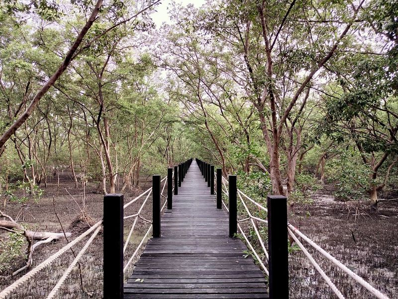 Nature Tree Treescape Tree And Sky Trees And Sky Mangrove Mangrove Forest Mangroves Mangrove Swamp Mangroveplant Mangrove Forests Mangrooves Mangrove Plant Bridge Bridges Wood Leaf Wood Bridge