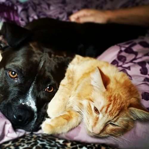 Sometimes they cuddle (Caoimhe secretly loves it) Dogsandcats Catstagram CaoimheandKaia Frenemies forcedlove