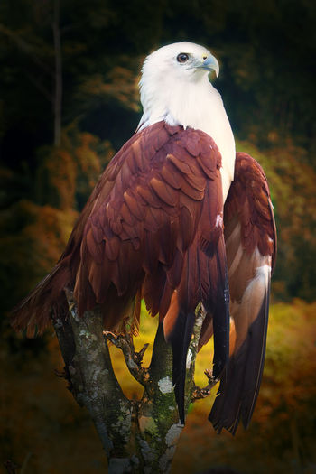 javanese eagles Animal Animal Themes Animals In The Wild Bird Branch Close-up Eagle Nature Outdoors