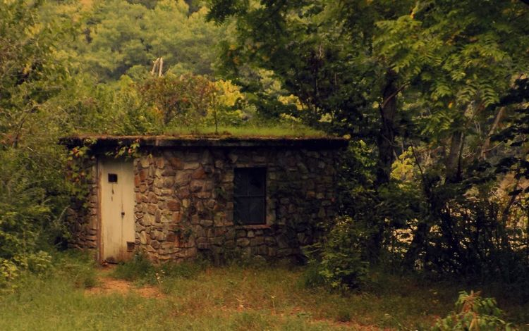 Abandoned Architecture Building Exterior Built Structure Damaged Day Discarded Exterior Field Freshness Green Green Color Growth House Nature No People Obsolete Old Outdoors Plant Scenics Tranquil Scene Tranquility Tree Worn Out