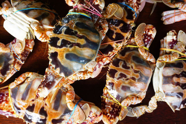 Crabs #brown #closeup #delicious #flat Shell #Freshness #Lego #RavensNation  #White Animal Themes Close-up Crustacean Day Food Indoors  Large Group Of Animals No People Sea Life Seafood UnderSea EyeEmNewHere EyeEm Selects