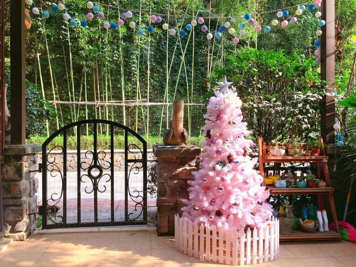 Sunny day sunny mood. Bright Light Sunny Front Yard Colorful Bulbs Pink Christmas Tree Day Flower Statue No People Outdoors Sculpture EyeEmNewHere