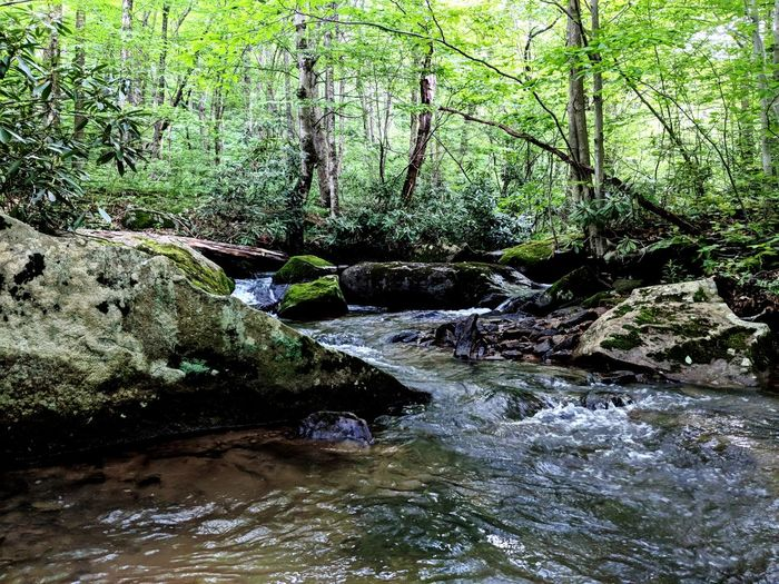 Memorial Day 2018 joyride Water Moss Stream Rock Green Flowing Water Woods