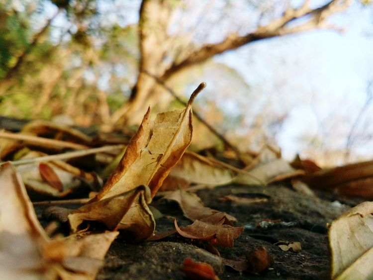 Day Nature No People Close-up Outdoors 🌲🚶🌲Forest Hike Nature Beauty In Nature Leaf Dry Leaf 🍂