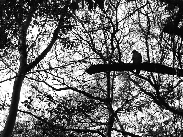Tree Nature Beauty In Nature Sky Bird Forest Branch Day Animal Themes Outdoors No People Animals In The Wild Animals In The Wild Branch Outdoors Day Forest Black First Eyeem Photo