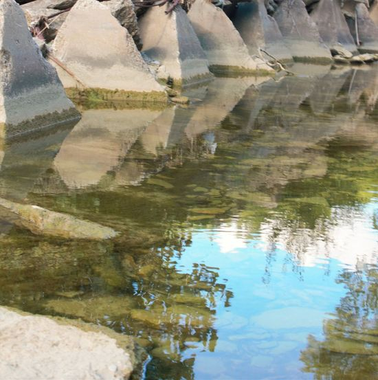 Beauty In Nature Close-up Day Lake Nature No People Outdoors Puddle Reflection Sky Standing Water Tree Water Waterfront