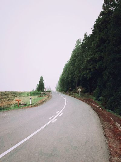 driving in fog is one of the best feeling when travelling Travel Destinations Travel Adventure Sky Plant Road Tree The Way Forward Direction Clear Sky Transportation Nature Copy Space No People Day Growth Diminishing Perspective Tranquility Outdoors Green Color Road Marking