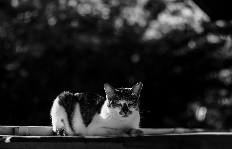 adorable black and white cat sunbathe Adorable Cat  Animal Themes Black And White Blackandwhite Cat Domestic Animals Domestic Cat One Animal Outdoors Pets Portrait Sunbath Sunbathing