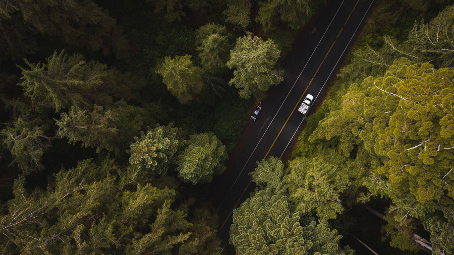 Aerial view of cars driving on forest road amongst giant redwood trees