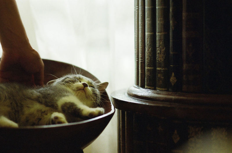 Cropped image of person touching cat sleeping on seat
