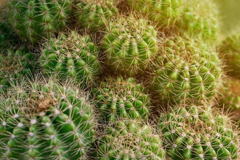 Full frame shot of succulent plants on field