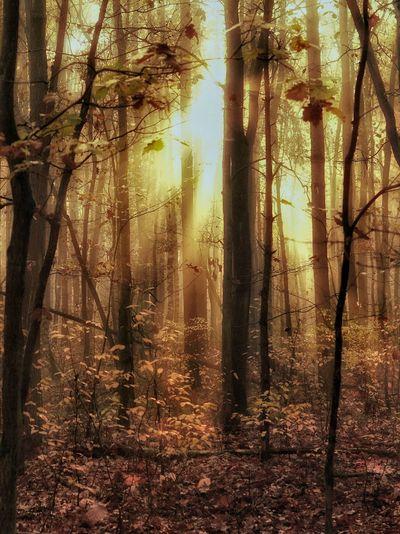 Forest, Wald im